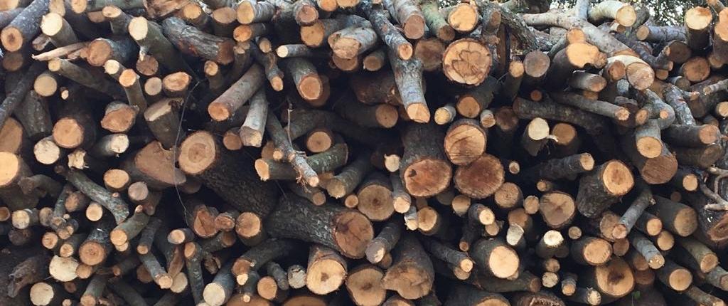 migliore legna da ardere roma